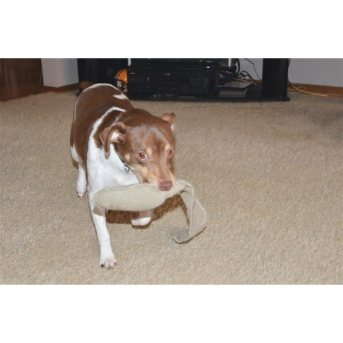 a dog carrying a toy in its mouth